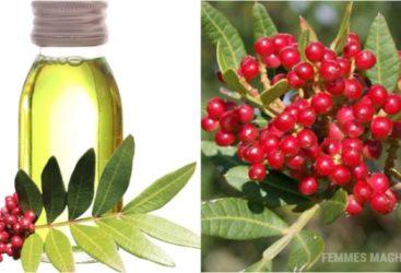 Avez-vous essayé l'huile de lentisque (قضوم) ?