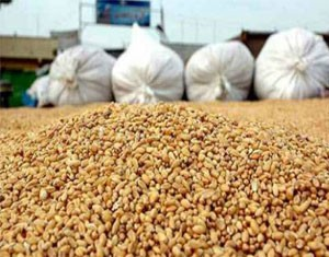 Le Synagri salue la révision à la hausse des prix de base des céréales