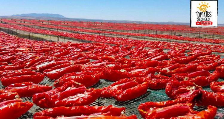 Accès aux marchés des tomates séchées deTunisie: le projet  PAMPAT met les petitsplats dans lesgrands !
