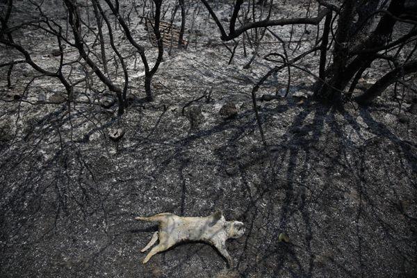 Ecologie: la nature tire la sonnette d'alarme